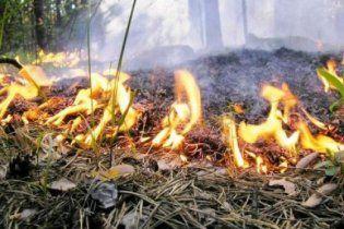 В Криму згоріло п'ять гектарів Нікітського ботсаду
