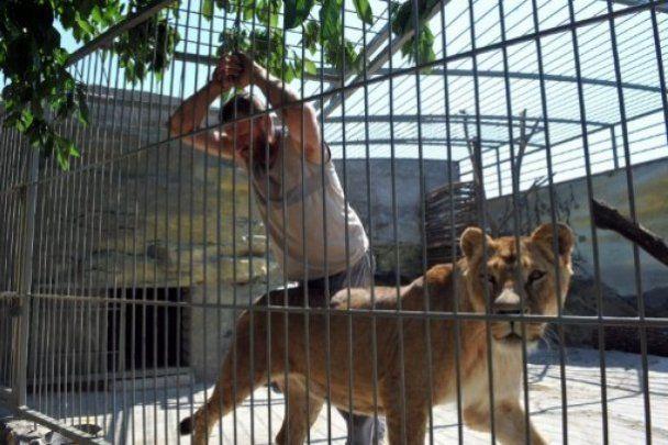 Украинец на 35 дней поселился в вольере со львами