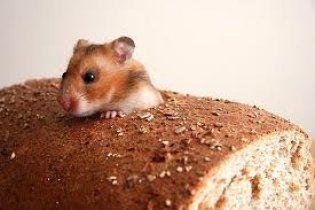 Австралійка знайшла всередині купленого батона живу мишу