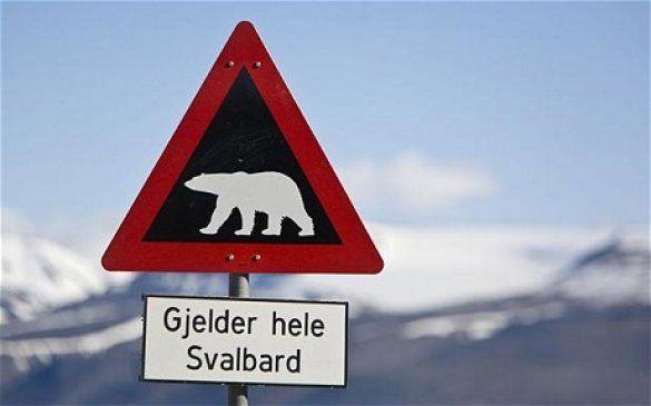 Білий ведмідь, Шпіцберген