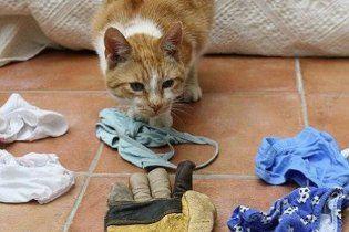 В Америке пойман очередной кот-клептоман, укравший у женщины бюстгальтер