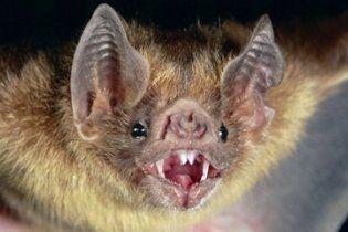 Вперше в історії зафіксовано смерть людини від укусу вампіра