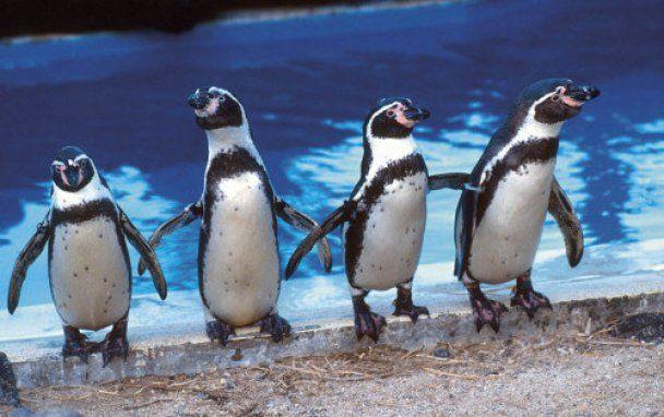 Одиноким пінгвінам у Британії зліпили друзів з піску