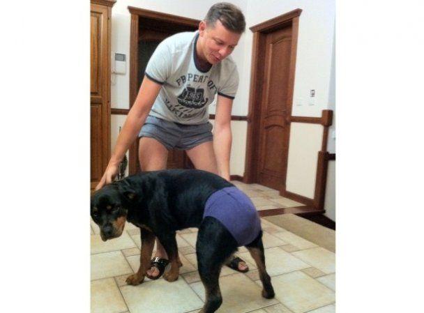 Ляшко одягнув на собаку свої труси