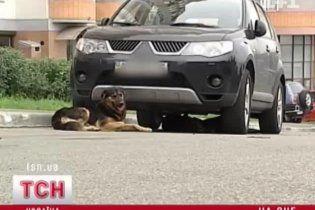 В Киеве бездомные псы погрызли автомобиль, нанеся ущерб на 15 тысяч гривен