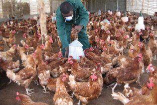 ООН предупредила - птичий грипп мутировал и возвращается