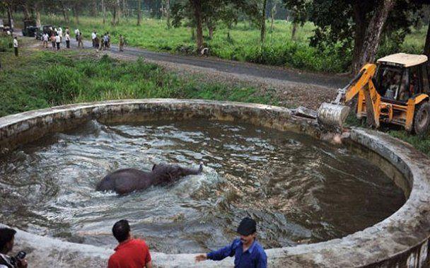 В Індії врятували слона за допомогою бульдозера