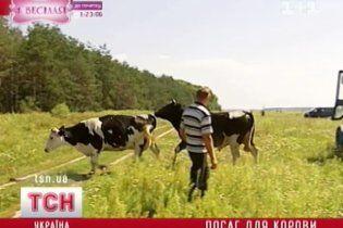 За хорошие надои владельцы коров получат 5 тыс. гривен от государства