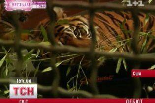 У США рідкісних суматрійських тигренят вперше показали публіці