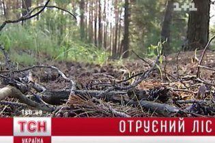 На север от Киева потравили леса