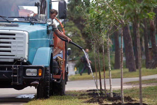 Найдовшу в світі алею сакур висадили в Києві