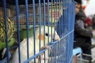 Папуга допоміг знайти свого викрадача