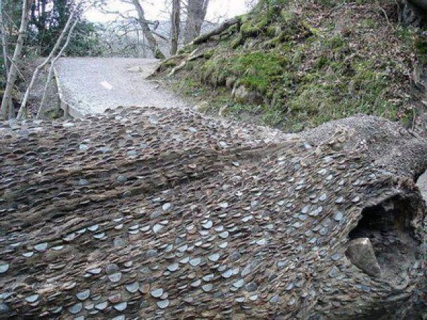 В Британии находят деревья, сплошь покрытые деньгами