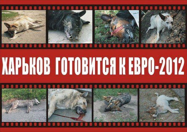 В украинских городах к Евро-2012 заживо сжигают животных