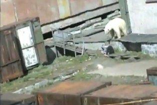 Девушке чудом удалось спастись от белого медведя