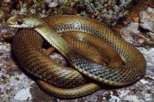 Змеи атаковали больницу на Донетчине