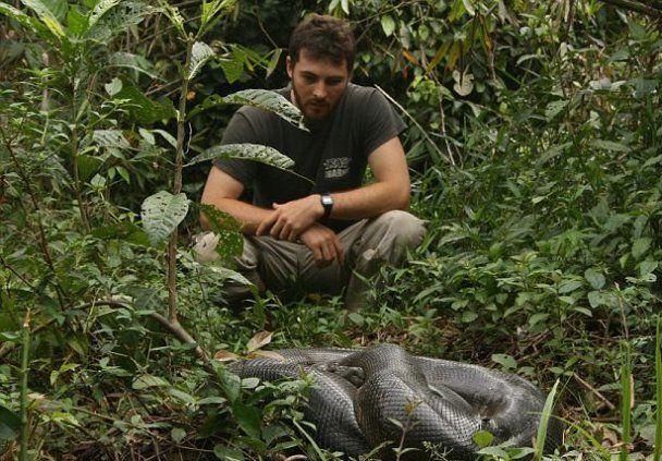 У Південній Америці спіймали 100-кілограмову анаконду