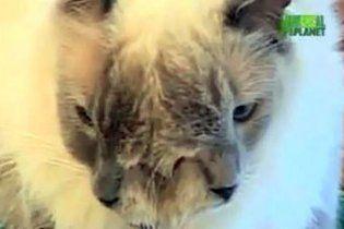Кот с двумя мордами попал в Книгу рекордов Гиннесса