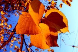 Осень продолжит радовать Украину теплом
