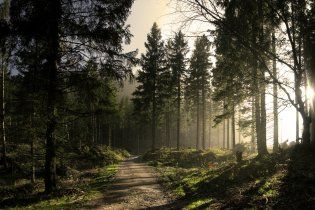 Український ліс дозволять рубати олігархам та іноземцям