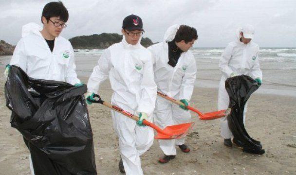 У берегов Новой Зеландии произошла экологическая катастрофа