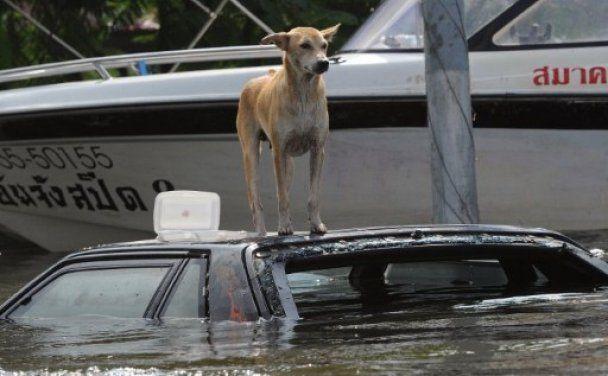 Наводнение в Таиланде может обернуться дефицитом жестких дисков в мире