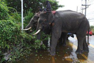 В плену тайского наводнения оказались 17 слонов