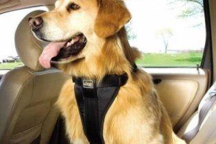Английские водители хотят возить собак с ремнями безопасности