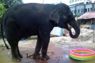 Цирковой слон насмерть растоптал ребенка во Вьетнаме