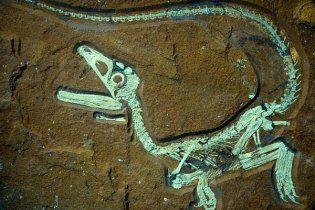 Найдены останки динозавра в удивительном состоянии: сохранилась даже кожа
