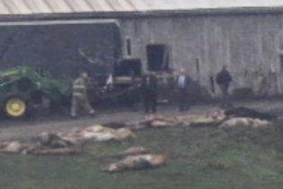 Застрелено 48 хижаків, випущених з приватного зоопарку в США