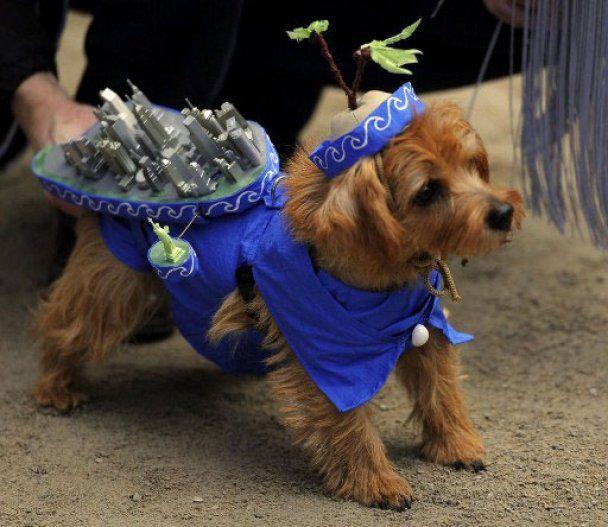Яскраві собачі карнавали в Нью-Йорку та на Філіппінах