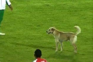 Собака прервала футбольный матч в Колумбии (видео)