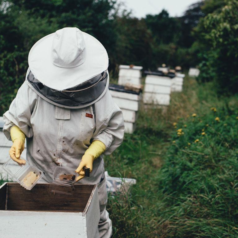 Упал во дворе: в Ровенской области погиб пасечник, которого атаковал рой пчел