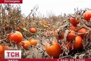 Фермери у відчаї від рекордного врожаю залишають овочі гнити на полях