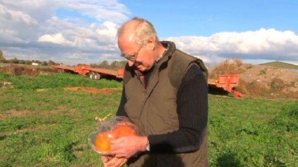 Фермер вырастил плантацию тыкв в форме Микки Мауса