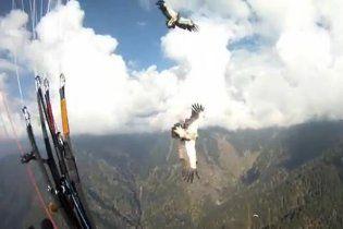 Парапланерист чудом выжил после столкновения с грифом в Гималаях (видео)