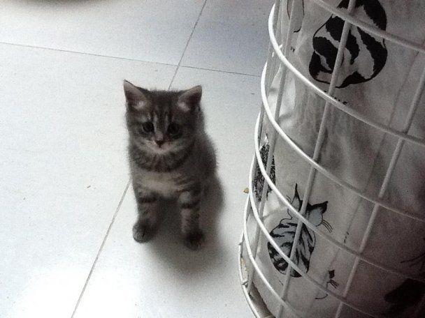 Пономарьов у Фейсбуці шукає сучку, а Січкар торгує кошенятами