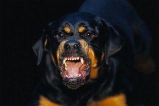 В Николаеве стая разъяренных собак разорвала женщину