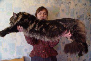 Кот устроил хозяину сотрясение мозга, упав со шкафа