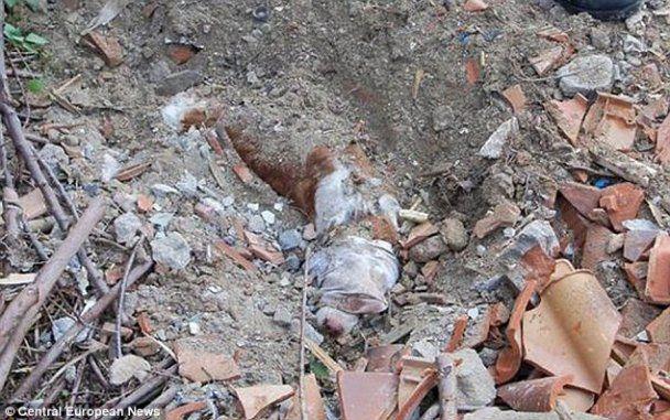 Хазяїн-садист поховав живцем свого собаку під купою землі і цегли