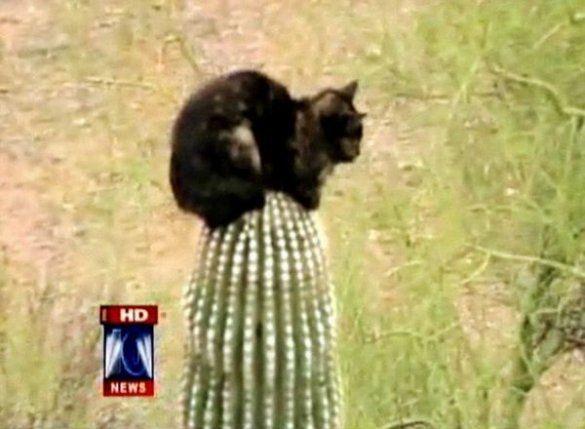 Кіт три дні просидів на кактусі_5