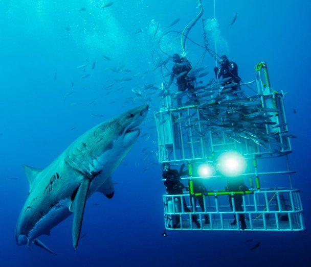 Фотографії на конкурс National Geographic 2011