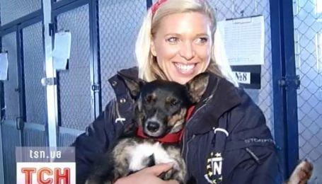 Немецкая принцесса прилетела в Киев спасать бездомных собак