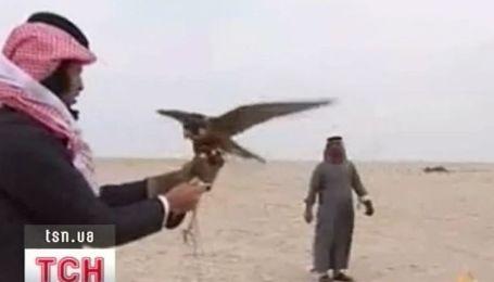 Соколиную охоту открывает в Крыму арабский шейх