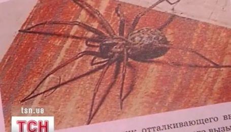 На Луганщине пятиклассницу укусил за палец паук
