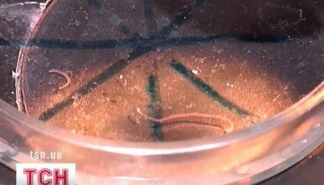 Вода с червяками потекла из крана в Чернигове