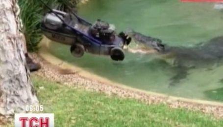 Австралийский крокодил отвоевал у садовников газонокосилку