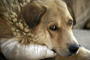 Перший суд у справі київських вбивць собак закінчився бійкою