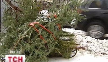 Куда исчезают новогодние елки?